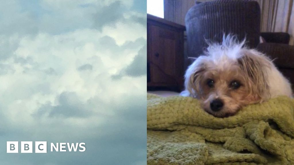 Grieving woman 'sees dead dog's face in clouds' - BBC News