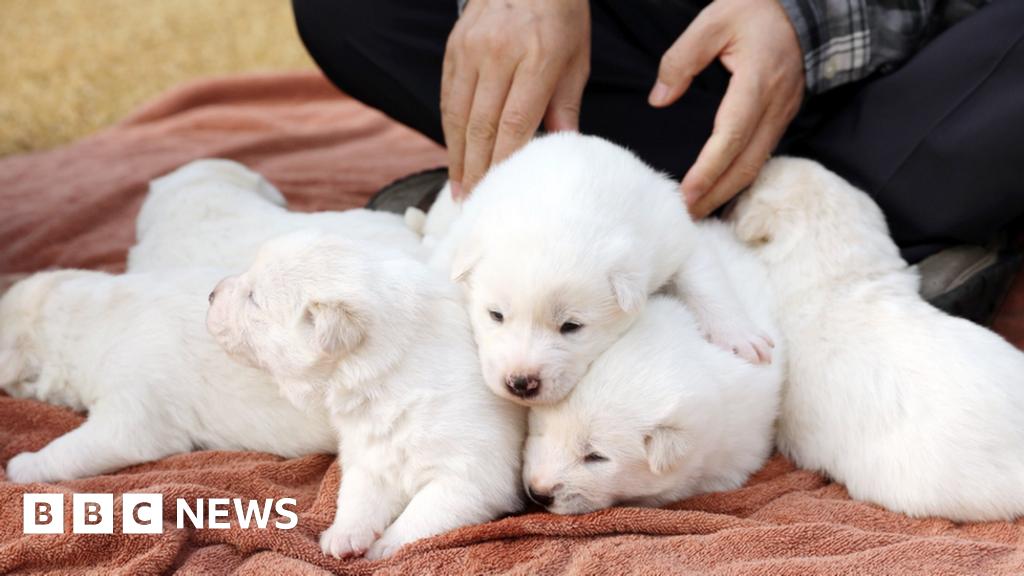 South Korea President Unveils Peace Gift Puppies Bbc News