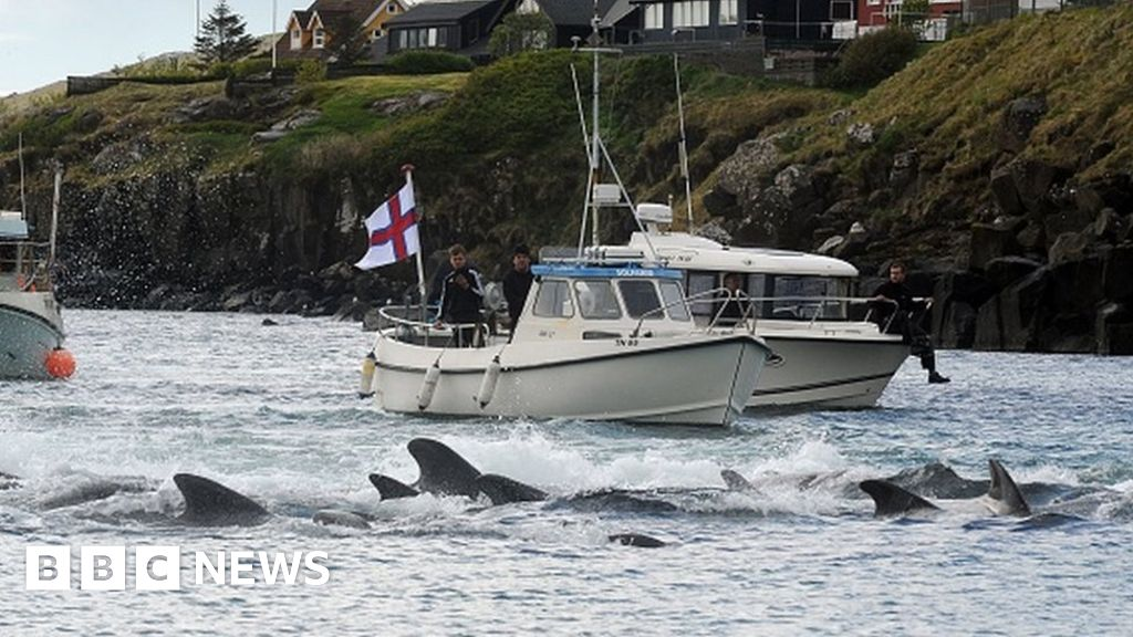 Faroe Islands: Anger over killing of 1,400 dolphins in one day