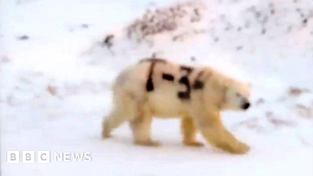 www.bbc.com