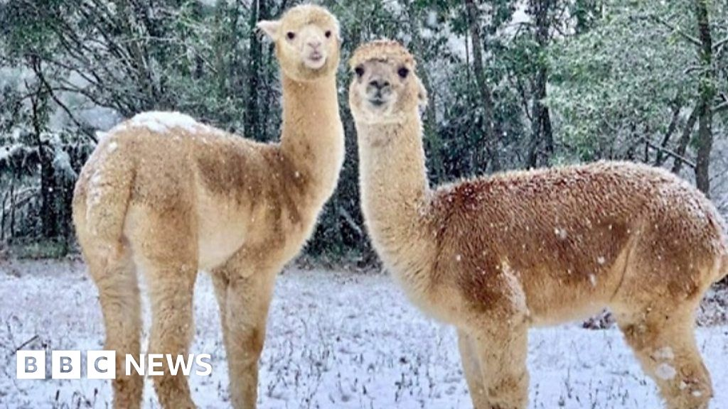 Australia: New South Wales and Victoria are experiencing the coldest weather in decades
