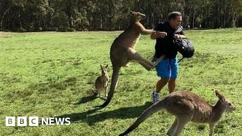 Kangaroos attacking carrot-bearing tourists spark warnings - BBC News