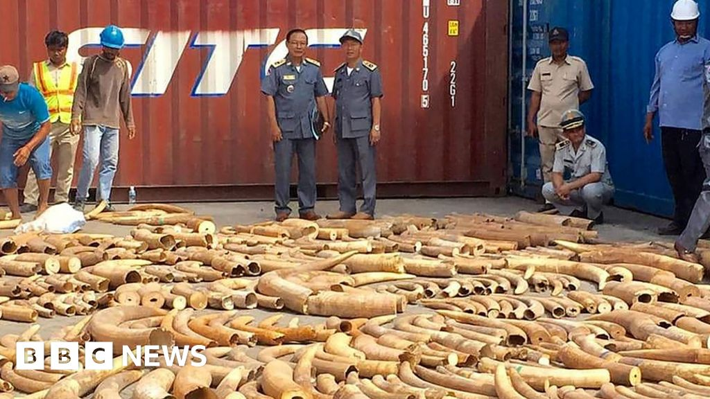 Cambodia makes record breaking ivory haul at port