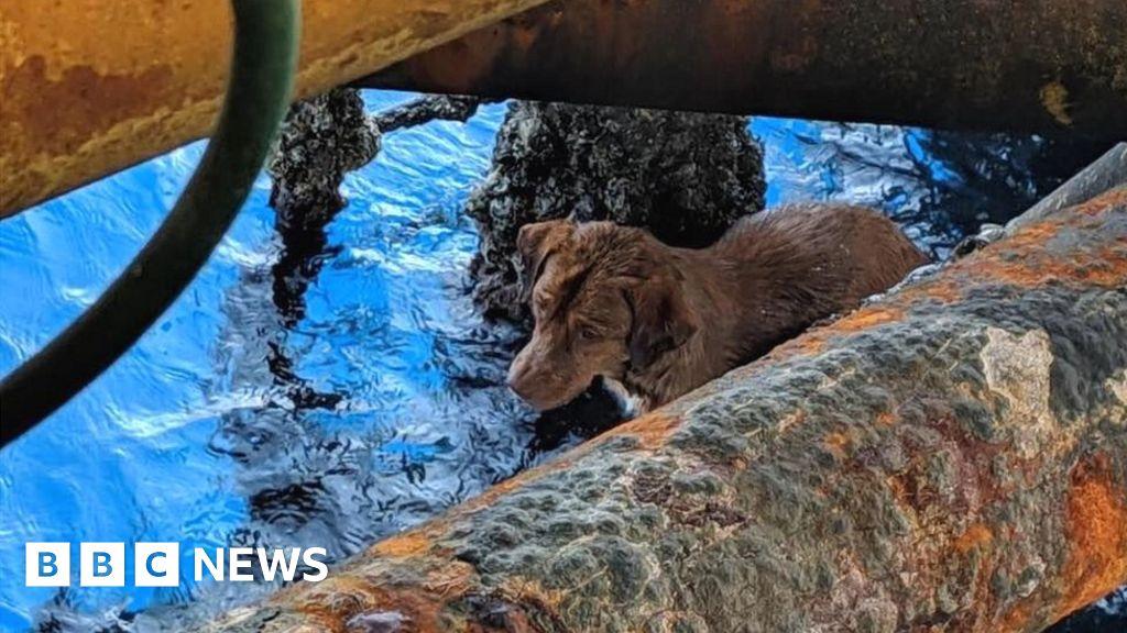 Dog rescued 220km off Thai coast