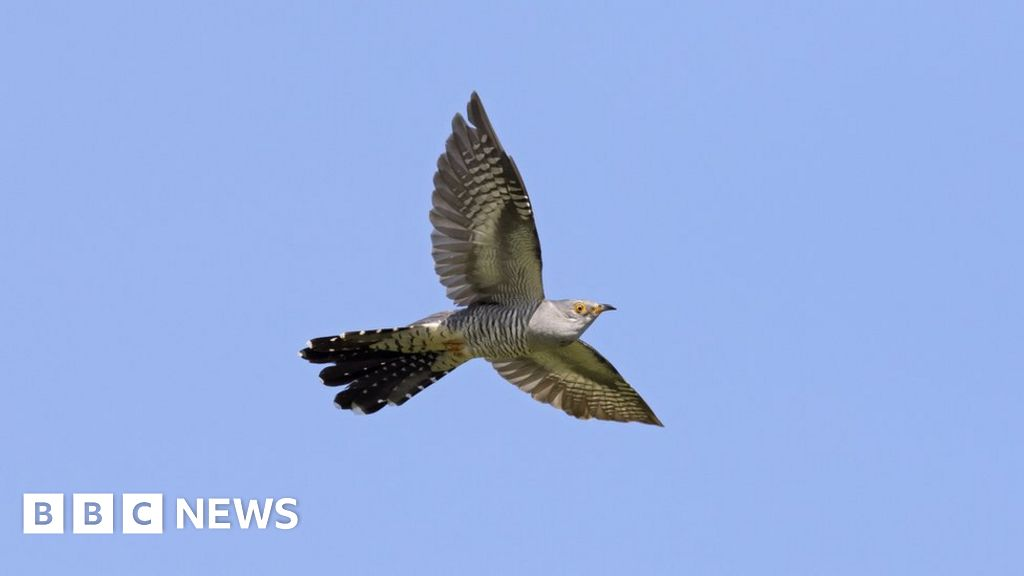 Climate change 'has affected a third of UK bird species'