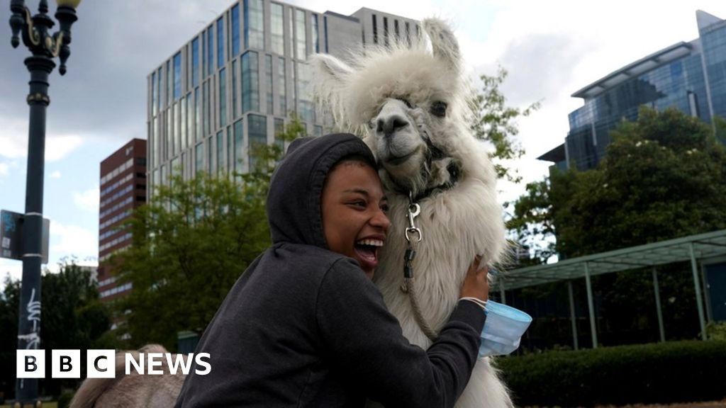 Week in pictures: 1 August-7 August 2020