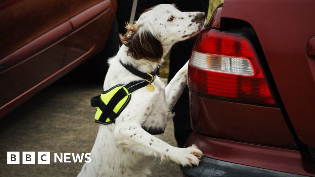 Manchester Rescue Home Dog Joins Police In Luton Bbc News