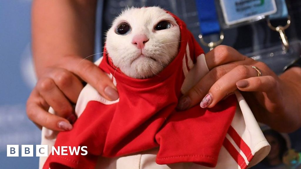 102012483 p06b0w3y - Russia's'psychic' cat calls World Cup opener