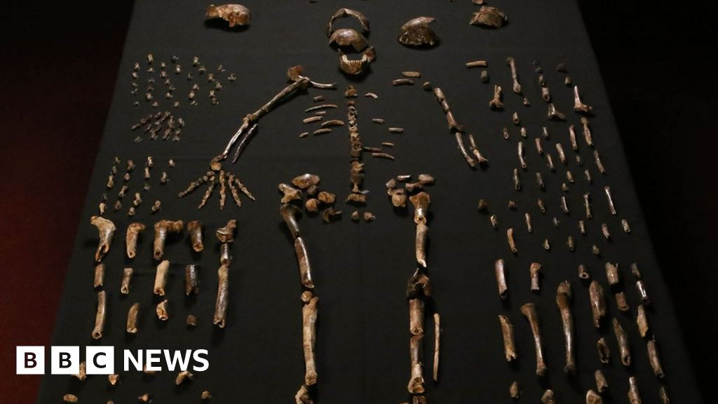 New human-like species discovered in S Africa - BBC News
