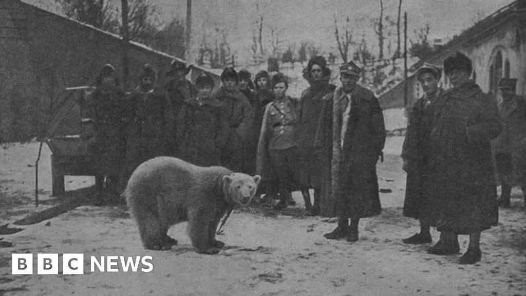 20989eba031 Scotland's forgotten link with WW1 polar bear Baśka - BBC News