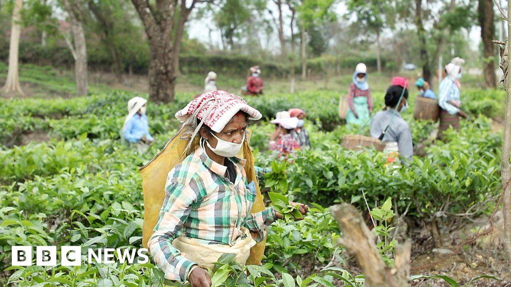 Coronavirus: The fears of India's tea workers in lockdown