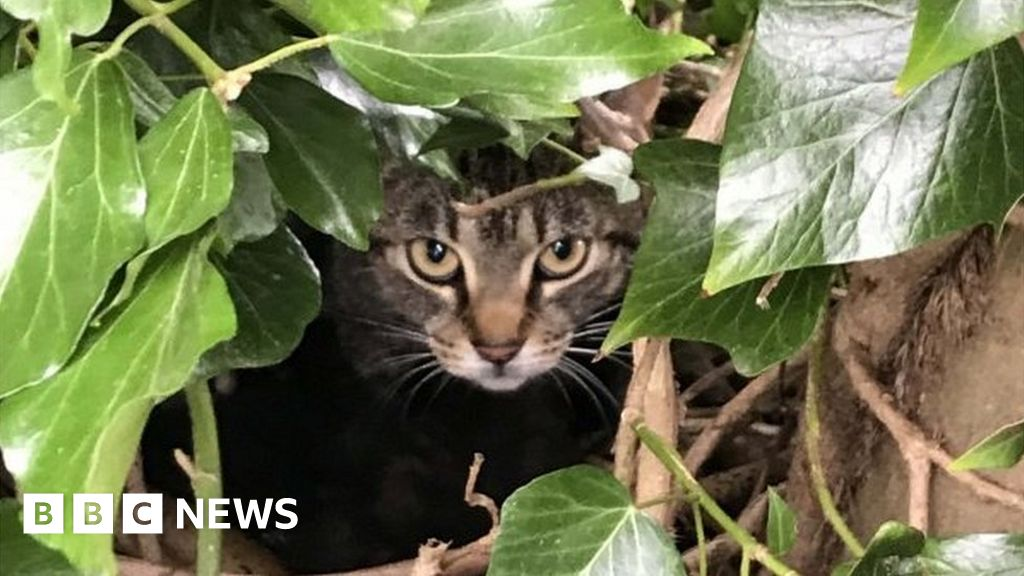 Mother cat and kittens found in Amersham bird's nest in tree