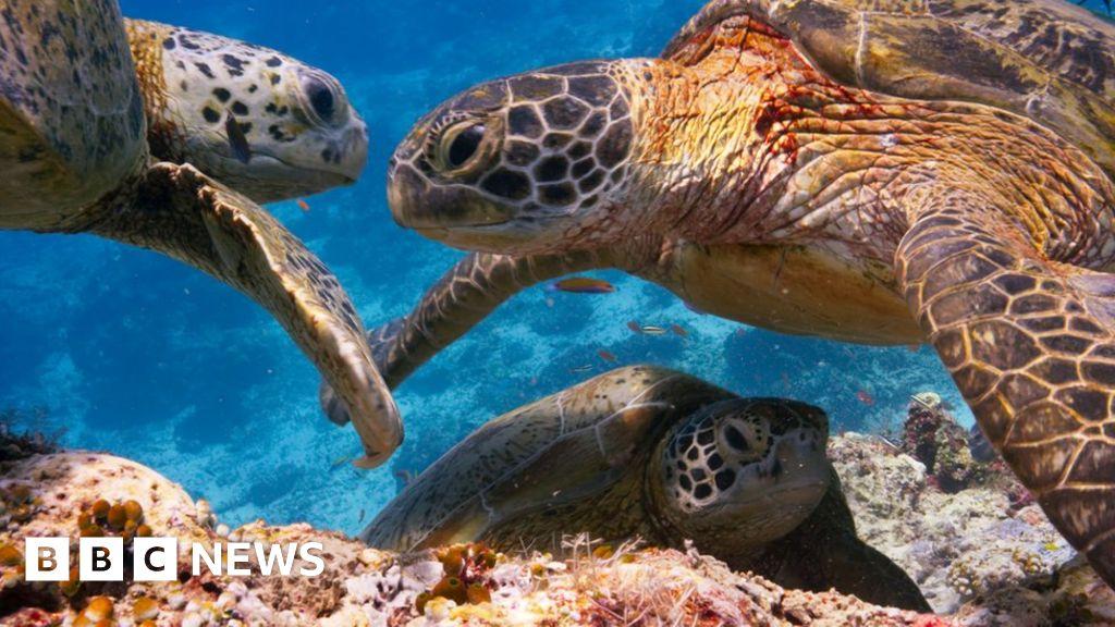 Blue Planet fans 'disturbing coastal wildlife'