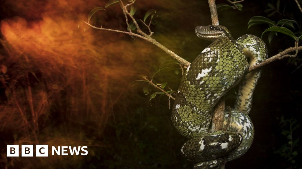 Image of Madagascan snake wins 2019 British Ecological Society photography competition