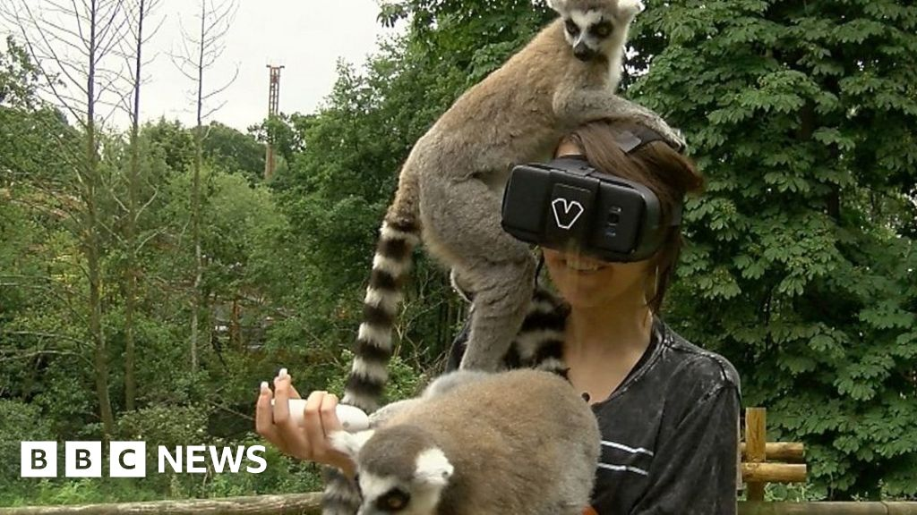 Goggles Help Blind Girl To See Animals Again Bbc News