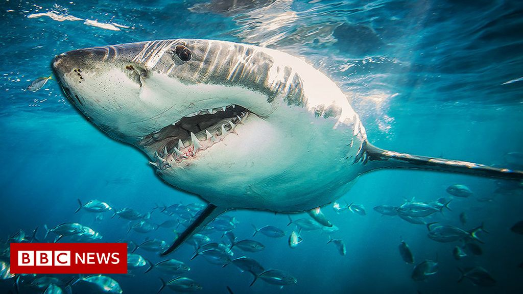 Shark DNA could help cure cancer and age-related illnesses in humans