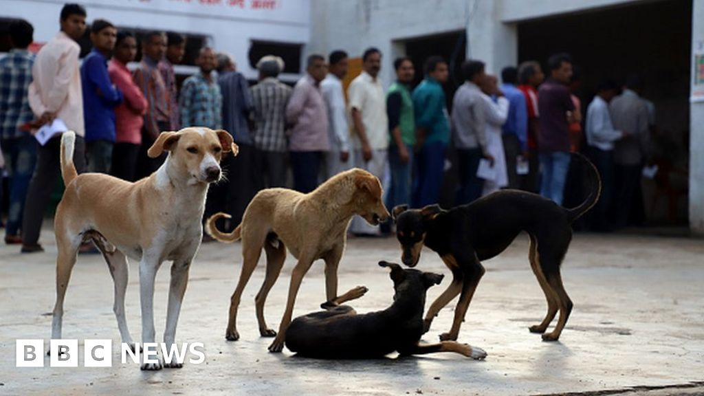 India state's dog-meat ban a 'major turning point'