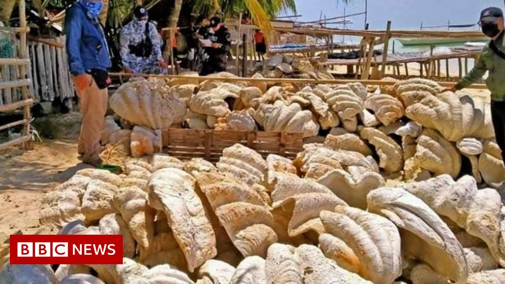 Philippines: A $ 25 million giant clam was seized
