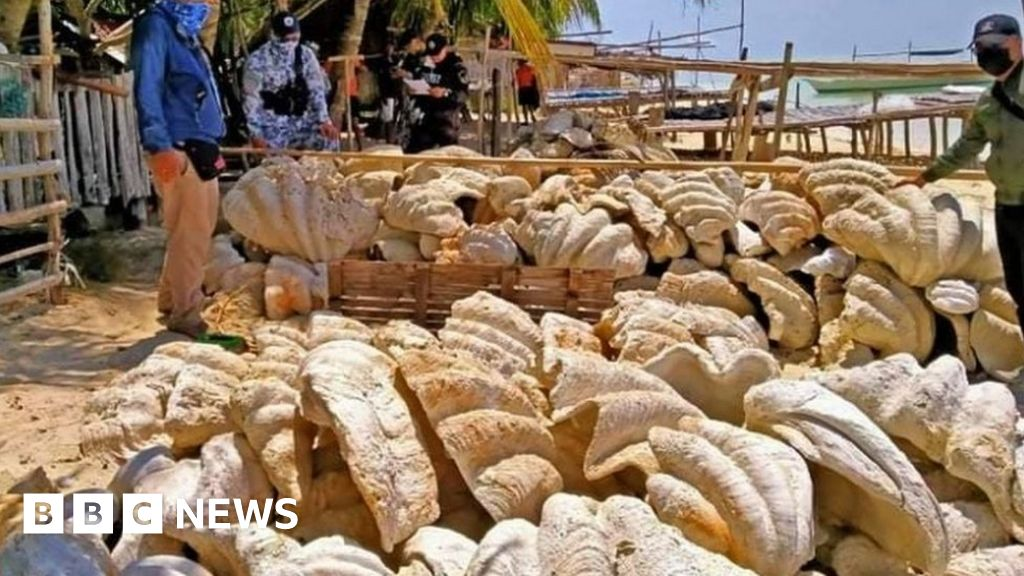 Philippines: Giant clam shells worth $25m seized in raid
