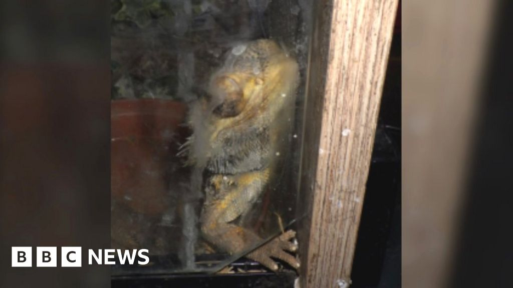 Somerset couple who neglected bearded dragons banned thumbnail