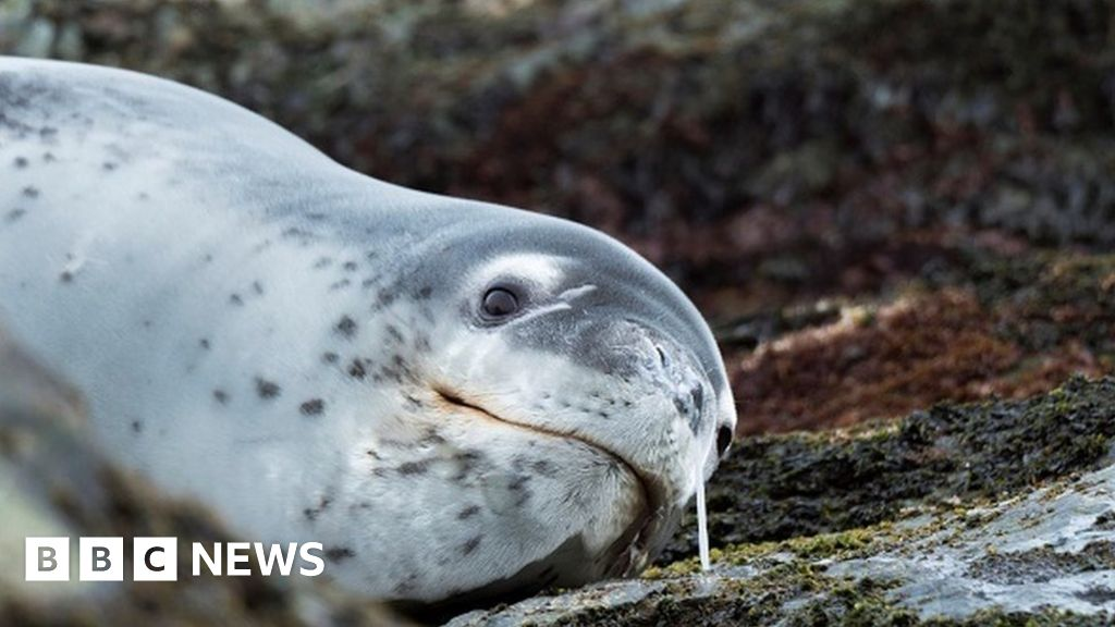 Memory stick found in frozen seal poo