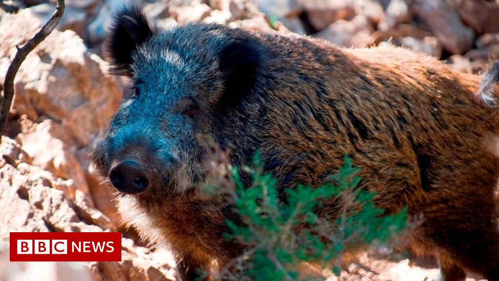 Italian son shoots father dead during boar hunt