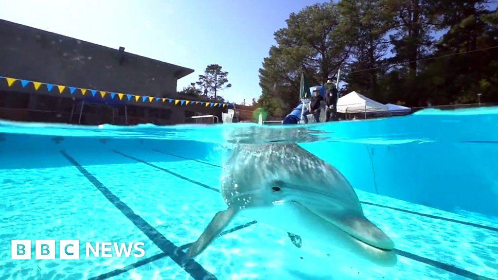 Click News: Robo-dolphin creates a splash