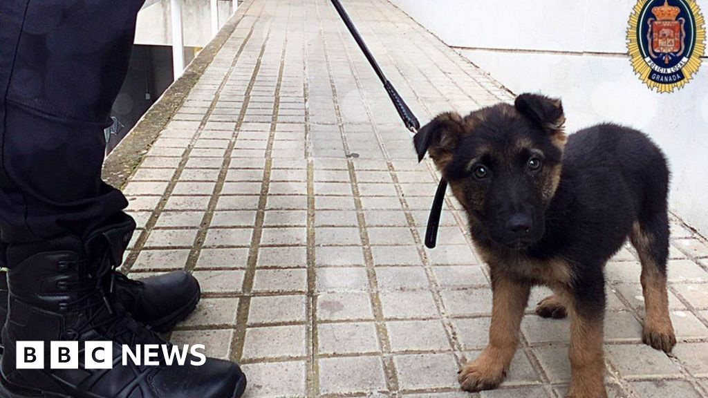 Spanish police recruit mistreated puppy