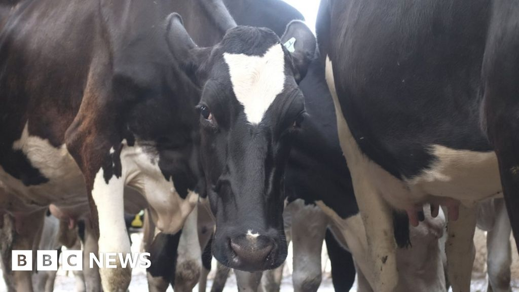 108365534 cow.'