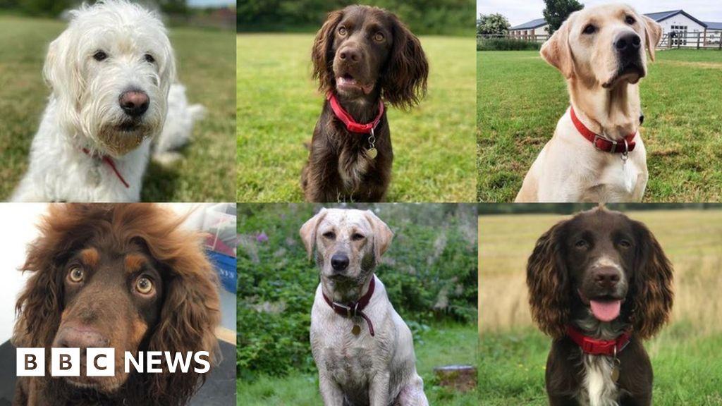 Dog images · Pexels · Free Stock Photos | 576x1024