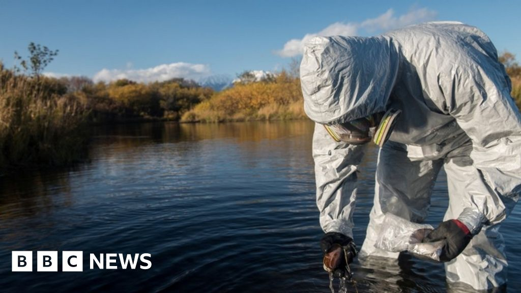 Algae to blame for death of sea life in Russian far east