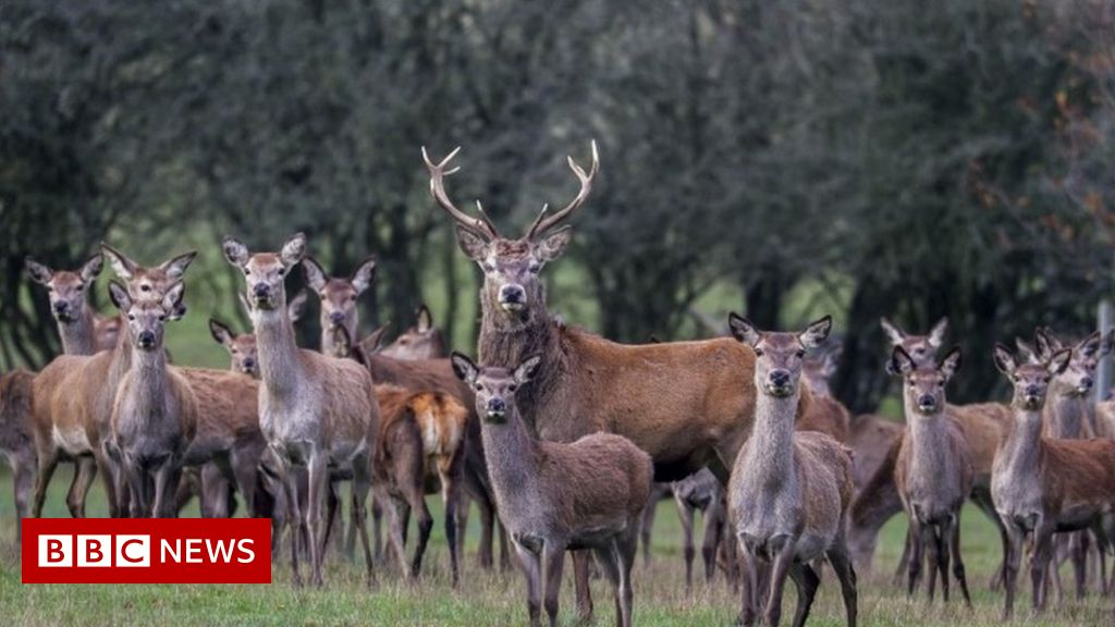 Portugal outrage after Spanish hunters massacre 500 wild animals