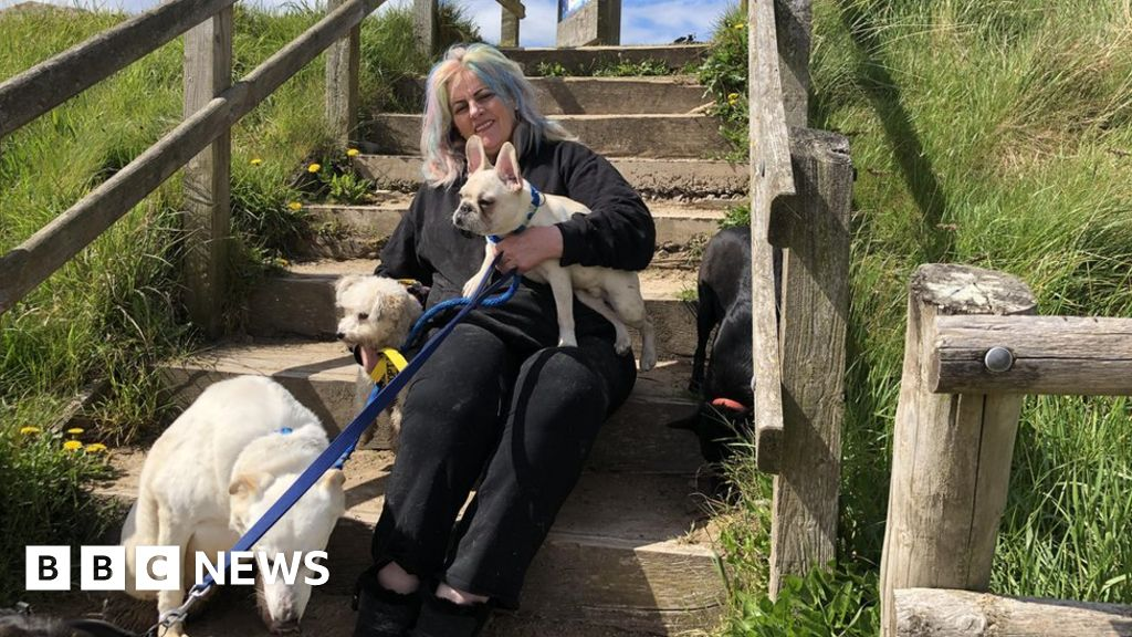 Disabled dogs charity raising funds to create north Wales centre