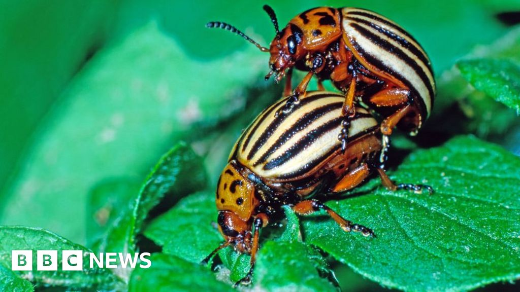 Climate Change: Heatwaves 'halve' Male Insect Fertility