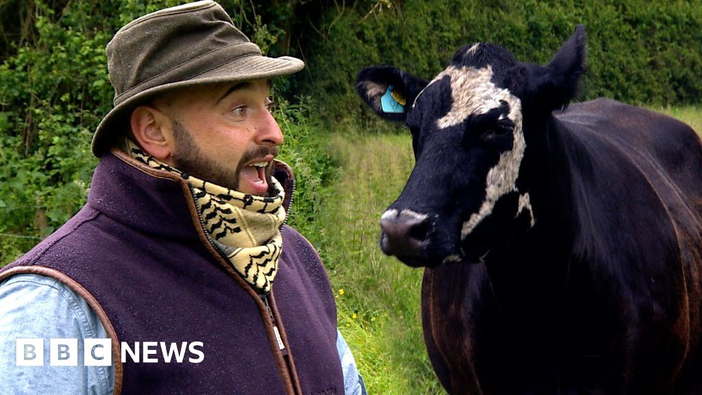 The vet who sings opera to cows