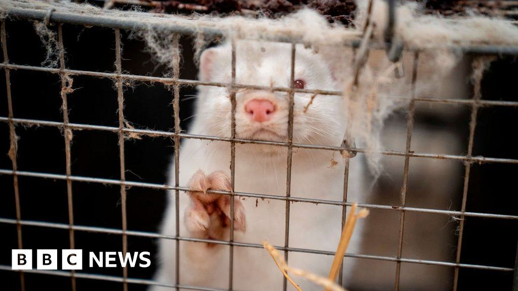 Fur industry faces uncertain future due to Covid - BBC News