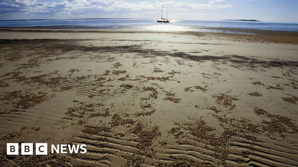 Ataque de tubarão na Austrália: homem morto caça submarina perto de Fraser Island