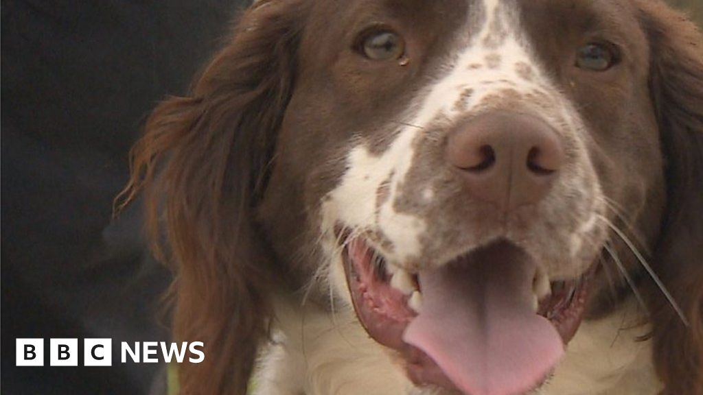 Springer spaniel protects rhinos by stopping Kenyan poachers
