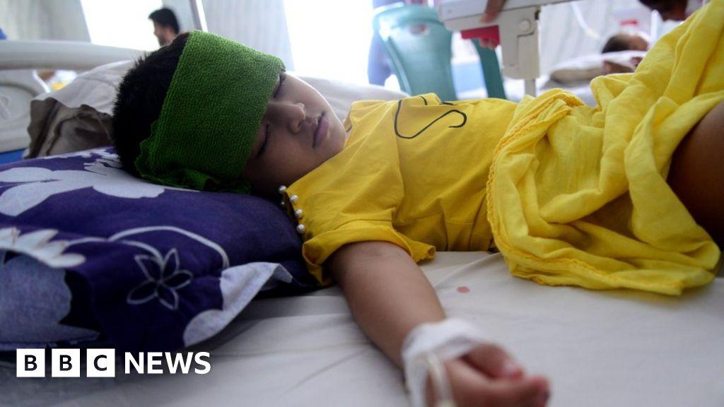 Bacterial allies make dengue fever cases dive