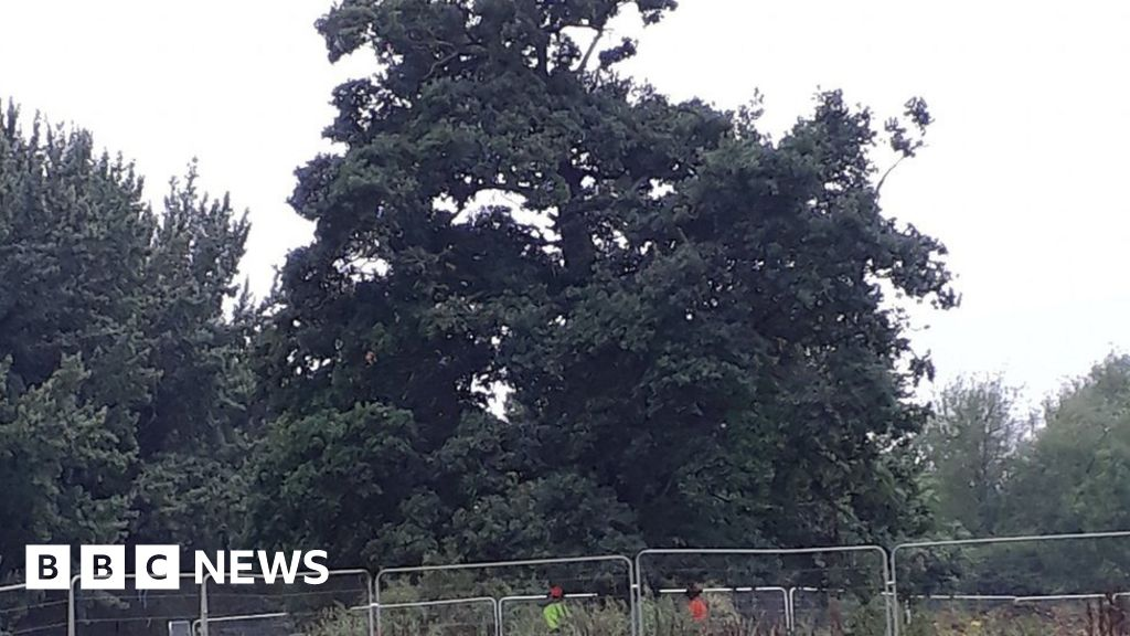 Apology 'after' HS2 school trees 'cut' - BBC News