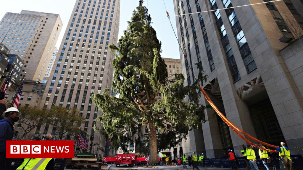 rockefeller-centers-famous-christmas-tree-on-brand-for-2020