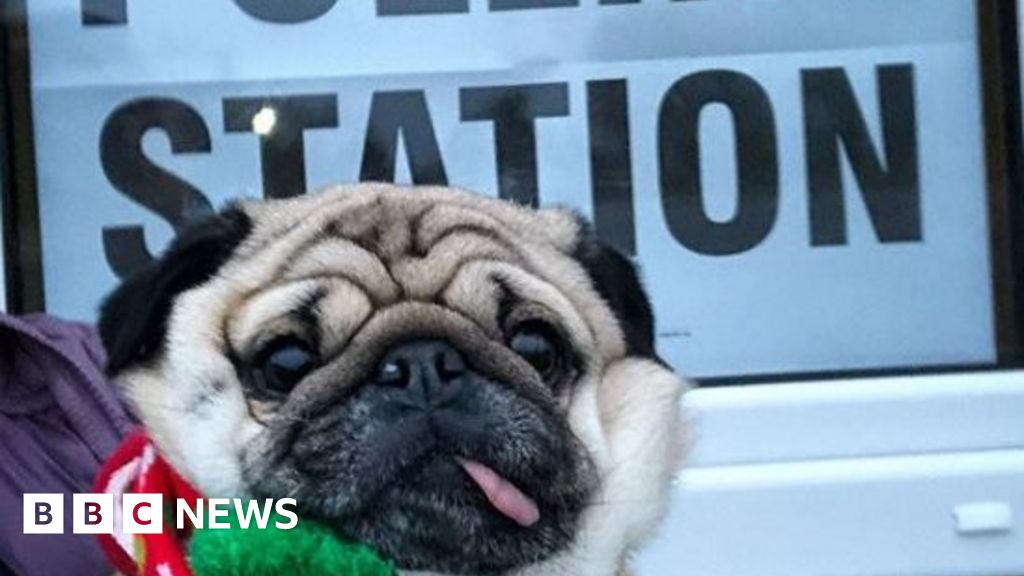 #DogsAtPollingStations: Pooches at the polls