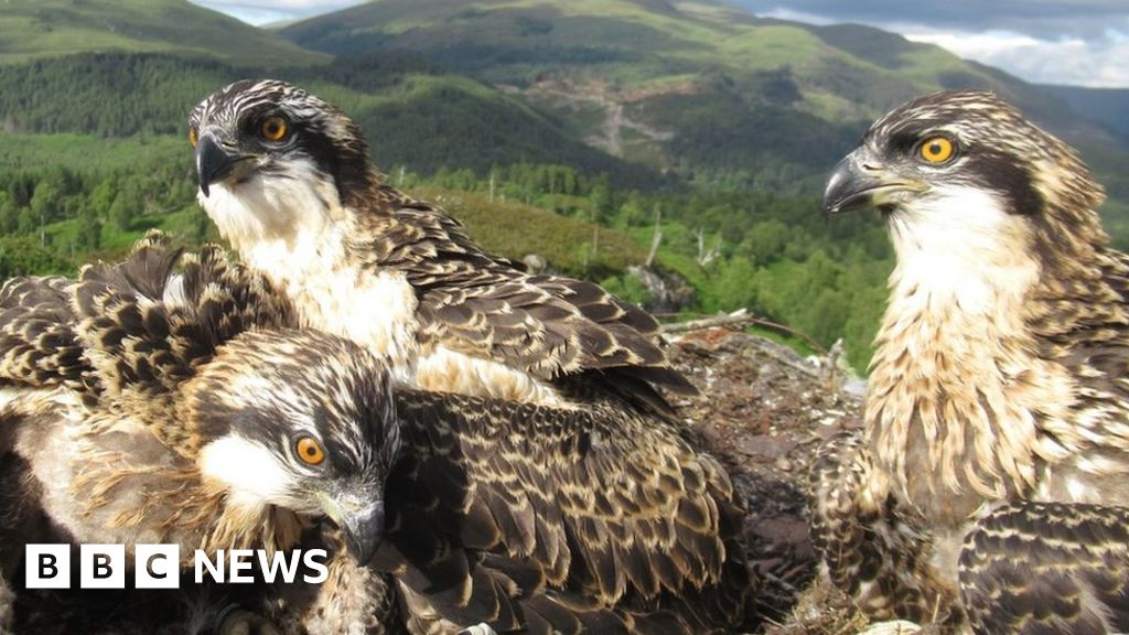 Osprey names: Dame Vera, Capt Tom and Doddie Weir in operating thumbnail