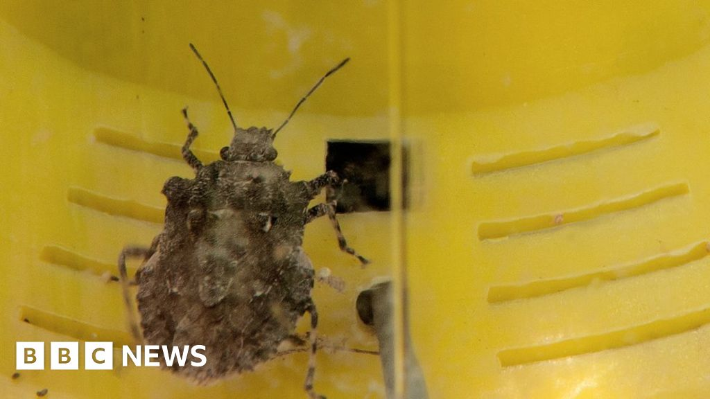Stink bugs threaten New Zealand car imports
