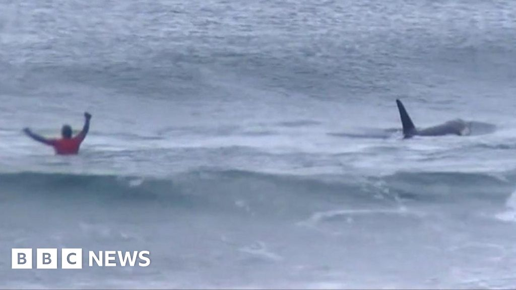 Whales interrupt surfing competition