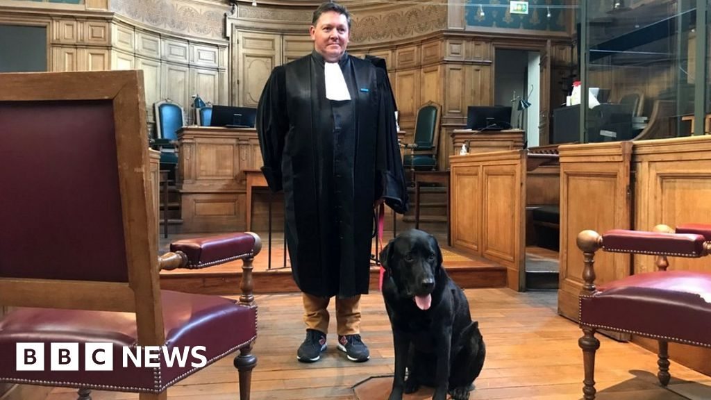 A French court dog helps calm victims concerned about crimes
