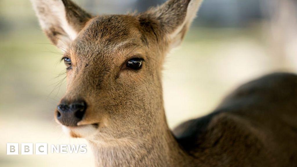 Japan gets deer-friendly bags to stop animals eating plastic