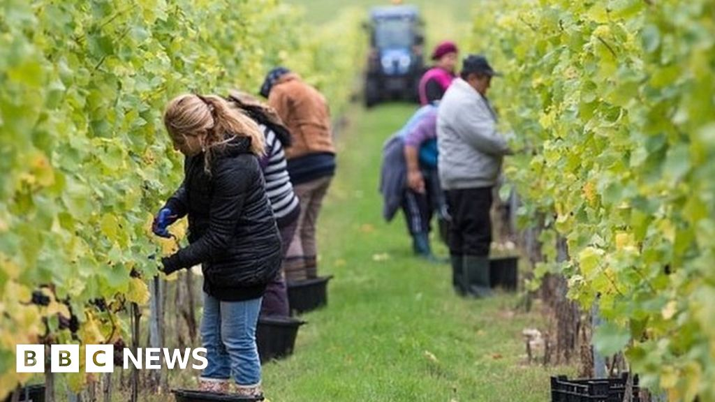 Brexit: Post-EU immigration and farming rules become law