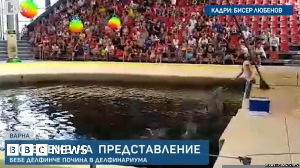 Baby Dolphin Death Causes Dismay In Bulgaria Bbc News