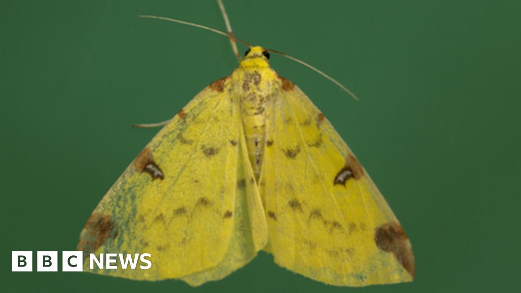 Nature crisis: Moths have 'secret role' as crucial pollinators